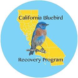 California Bluebird Recovery Program